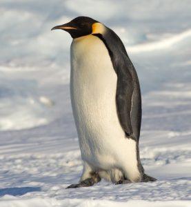 penguin-min